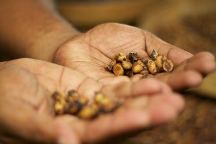 tn 1.2 Những loại cà phê độc, lạ trên thế giới có thể bạn chưa biết đến